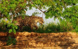 Help to preserve the Pantanal