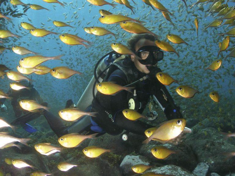 Scuba Diving Certified